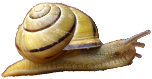 snail isolated smaller